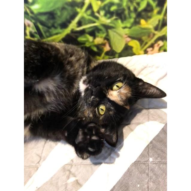 Photo of Moo