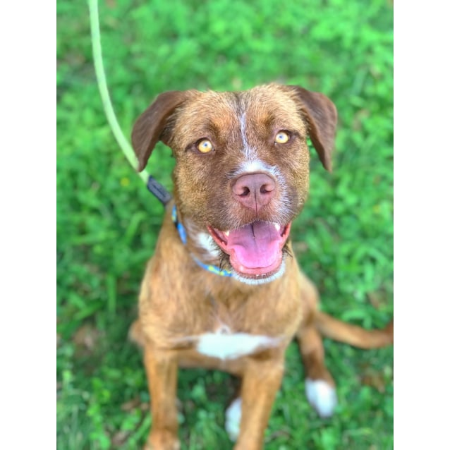 Photo of Harriet   $150 Adoption Fee