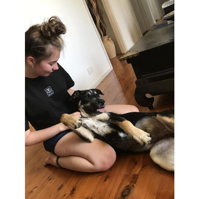 Photo of Milo ~ 7 Month Old Kelpie X