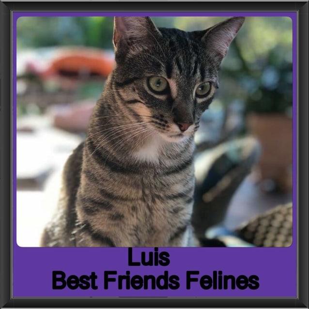 Photo of Luis