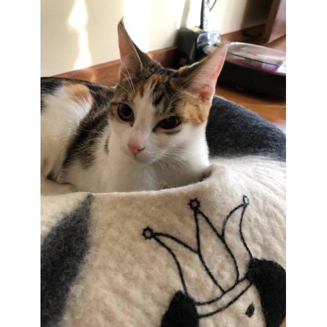 Photo of Molly