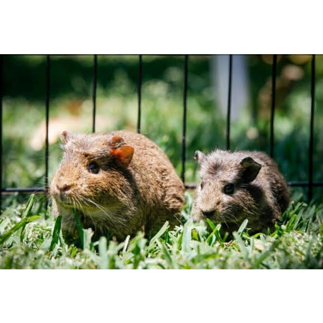 Photo of Quill And Wombat * No More Calls Please*
