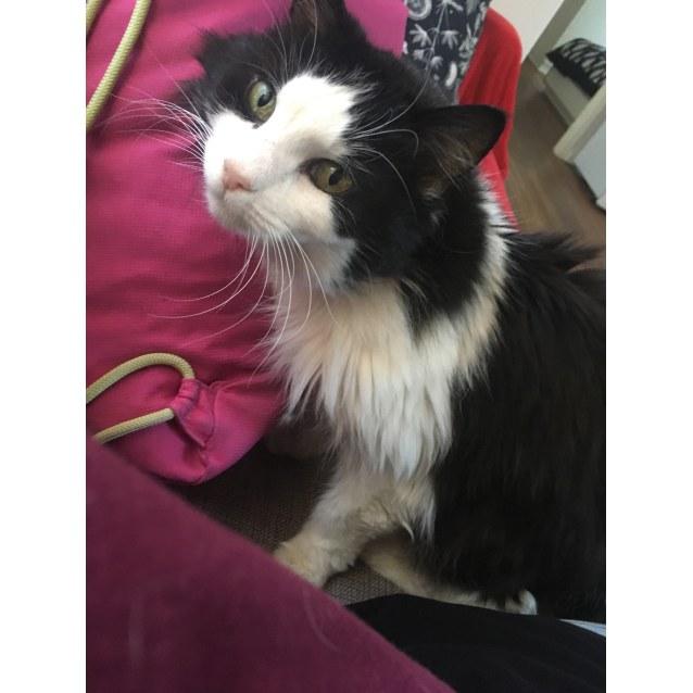 Photo of Roxy   Located In Preston