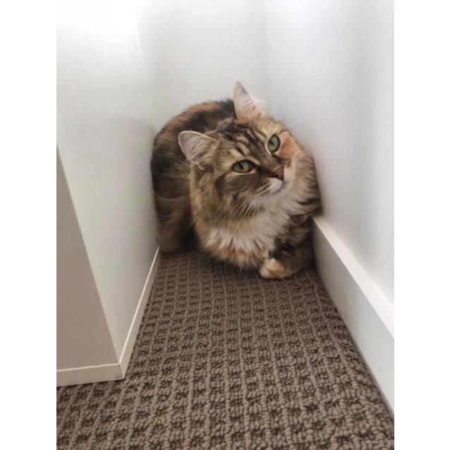 Photo of Meredith