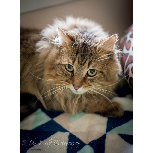Photo of Theodore