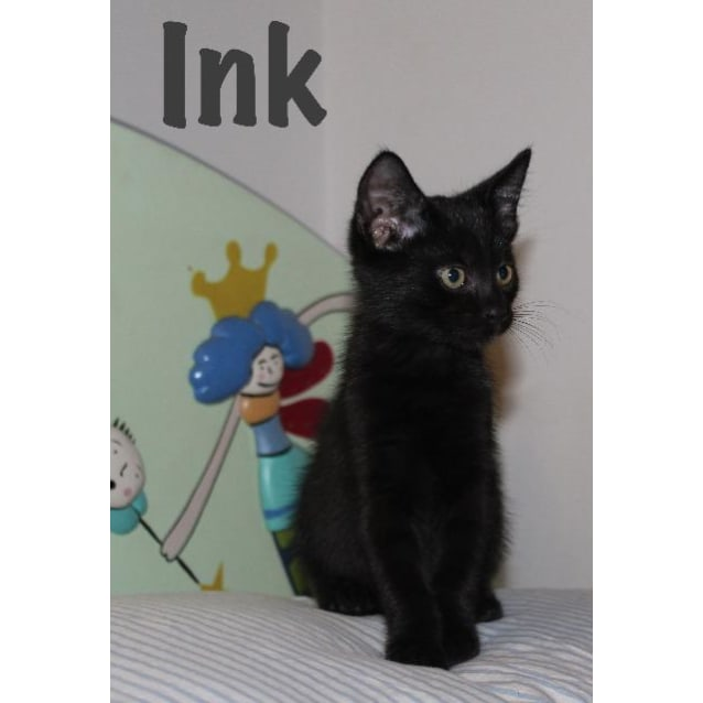 Photo of Ink