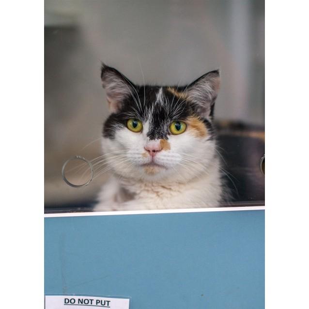 Photo of Shannan (Meg)