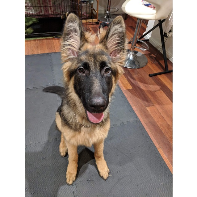Photo of Jed Is On Hold Pending Adoption
