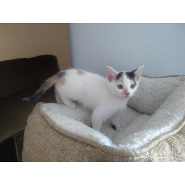 Photo of Abby (Einstein)