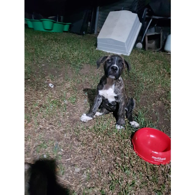 Photo of Buck
