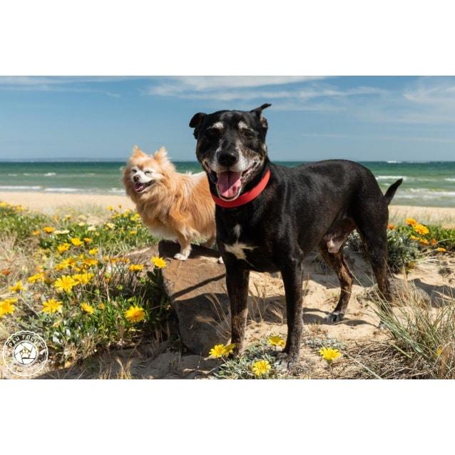 Photo of Kiki And Kiyo