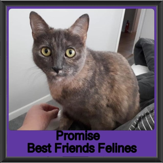 Photo of Promise