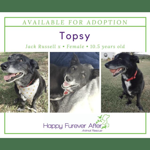 Photo of Topsy