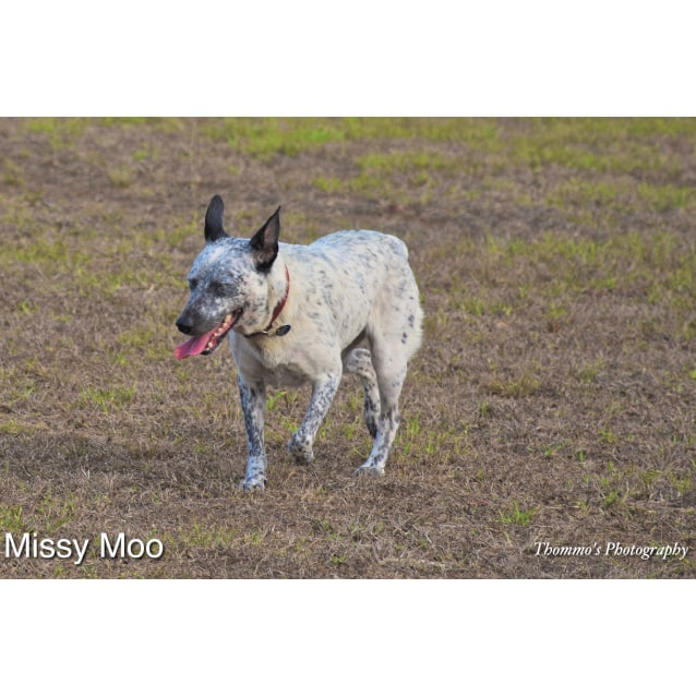 Photo of Missy Moo D3942