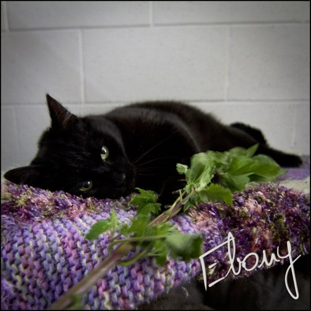 Photo of Ebony/Sooty