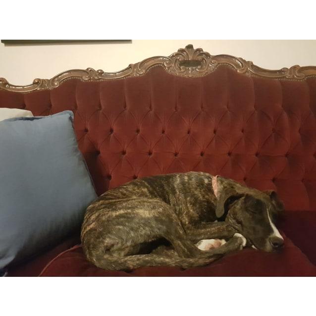 Photo of Annabella ~ Lovely Mastiff X Puppy