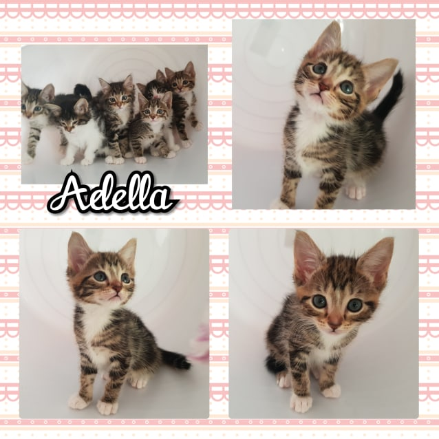 Photo of Adella