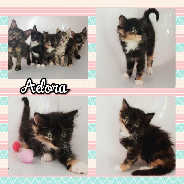Photo of Adora