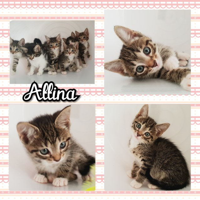 Photo of Attina And Aquata