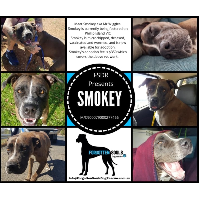 Photo of Smokey