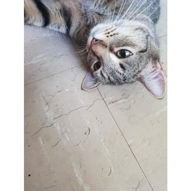 Photo of Pip
