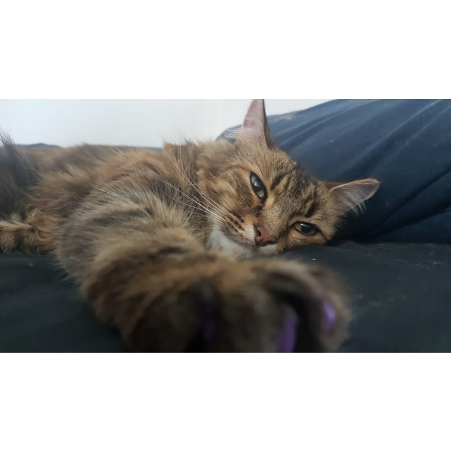Photo of Phoebe (Located In Melbourne)