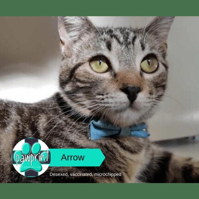 Photo of Arrow