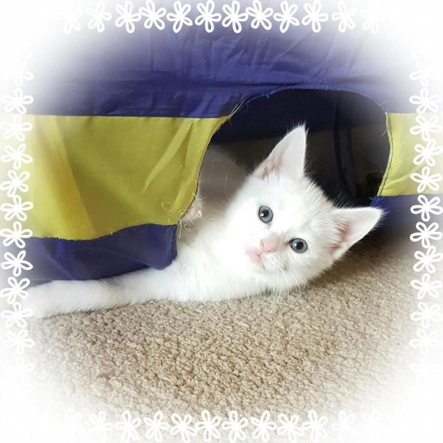 Photo of Scarlett O'hara