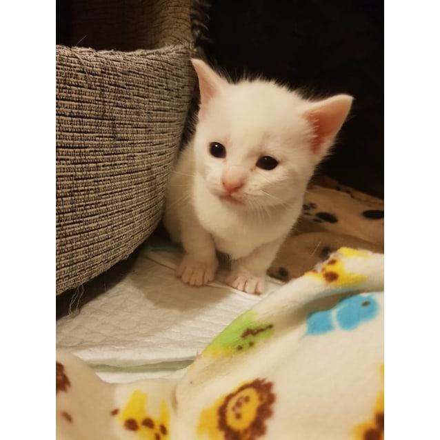 Photo of Scarlett ❤