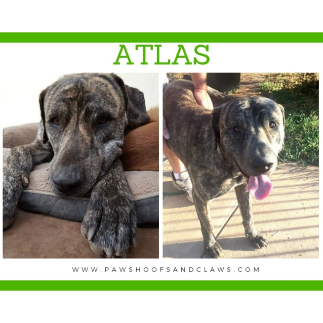 Photo of Atlas