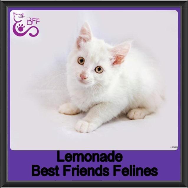 Photo of Lemonade