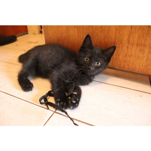 Photo of Ninja * No More Calls Please *