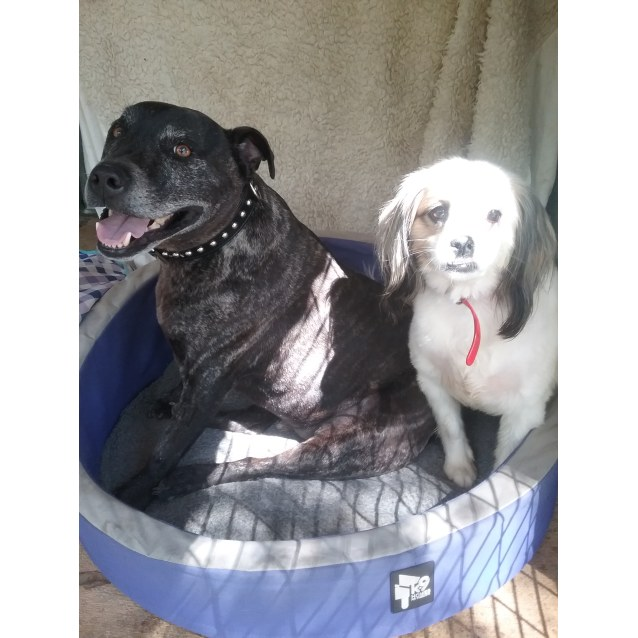 Photo of Diesel And Molly