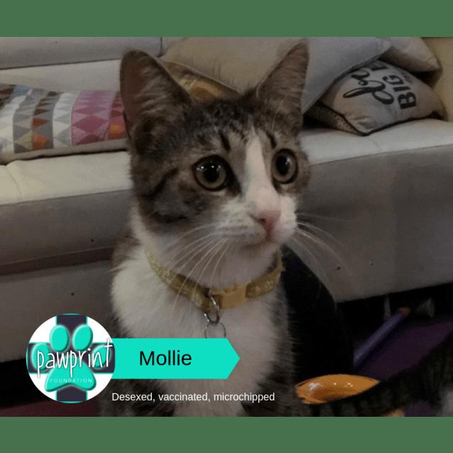 Photo of Mollie
