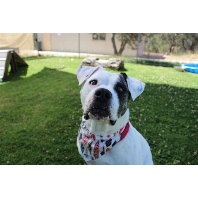 Photo of Bella