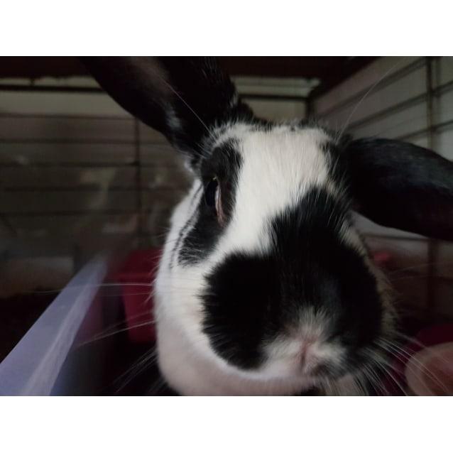 Photo of Rosie