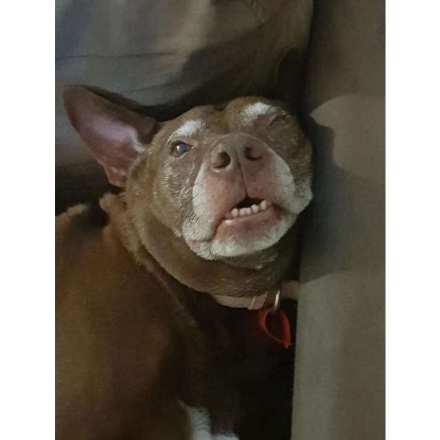 Photo of Fudge