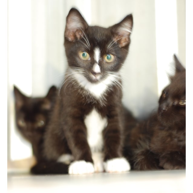 Photo of Male Kittens