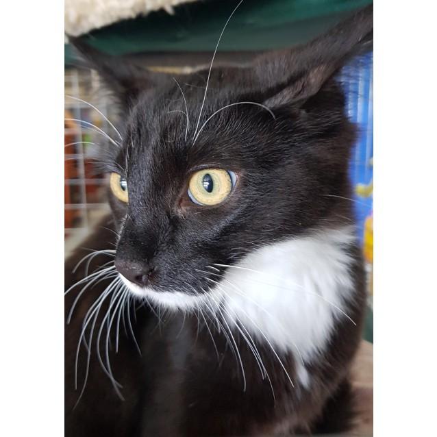 Photo of Morris