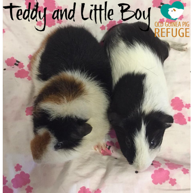 Photo of Teddy And Little Boy