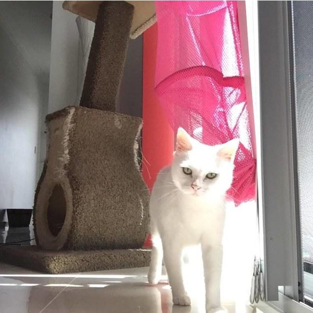Photo of Zima If037 18