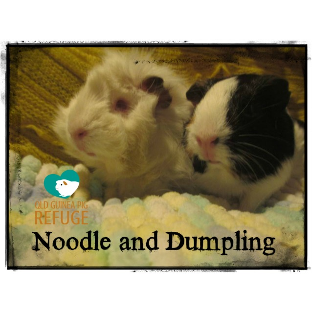 Photo of Noodle And Dumpling