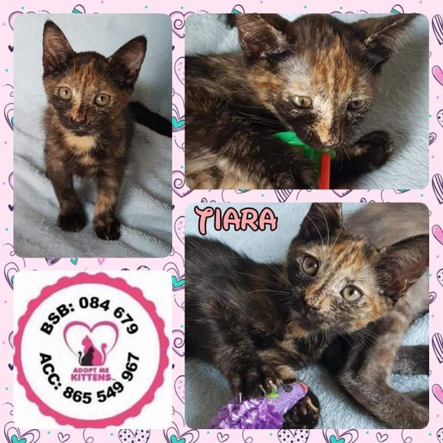 Photo of Tiara