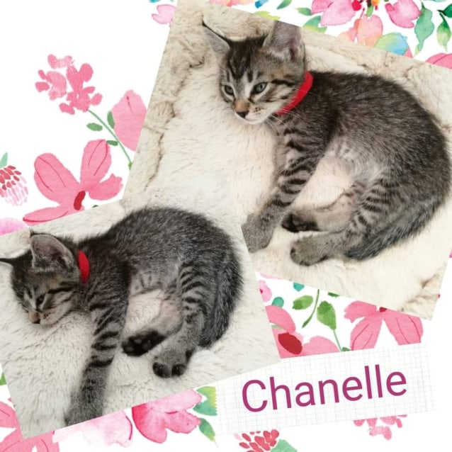 Photo of Chanelle