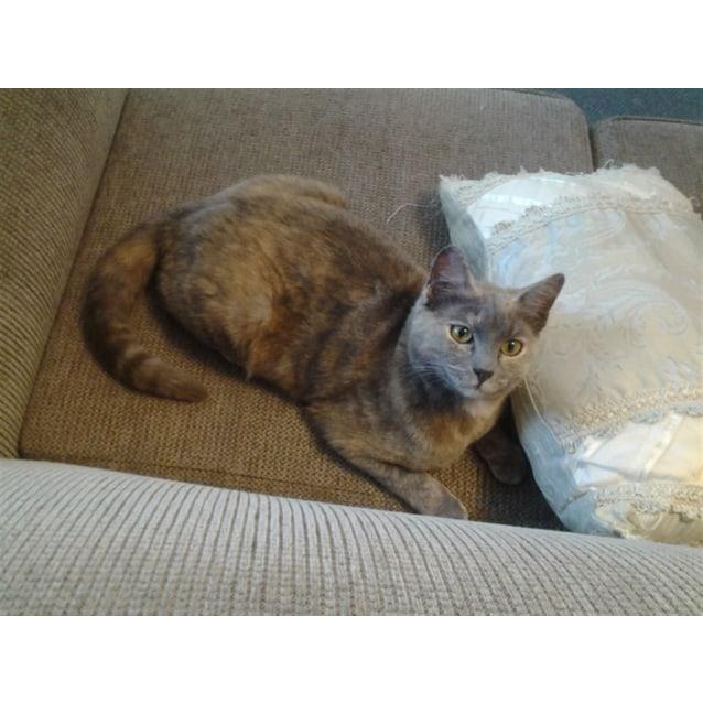 Photo of Meira
