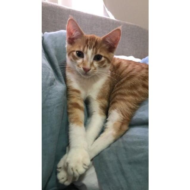 Photo of Freddie