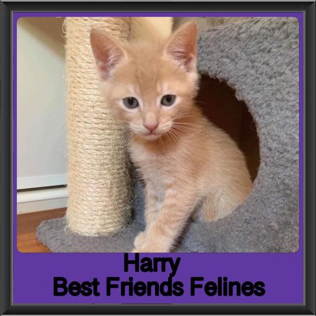 Photo of Harry