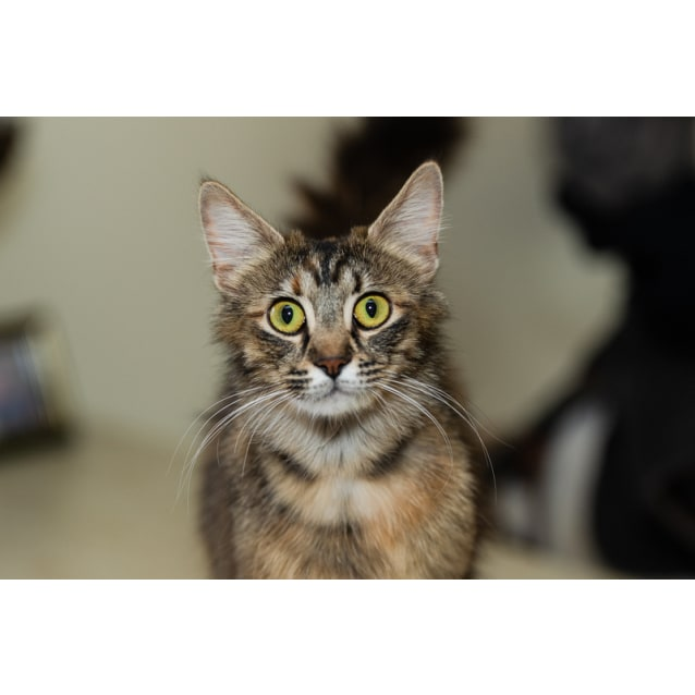 Photo of Toolula **Adopted & On Trial With My New Family**