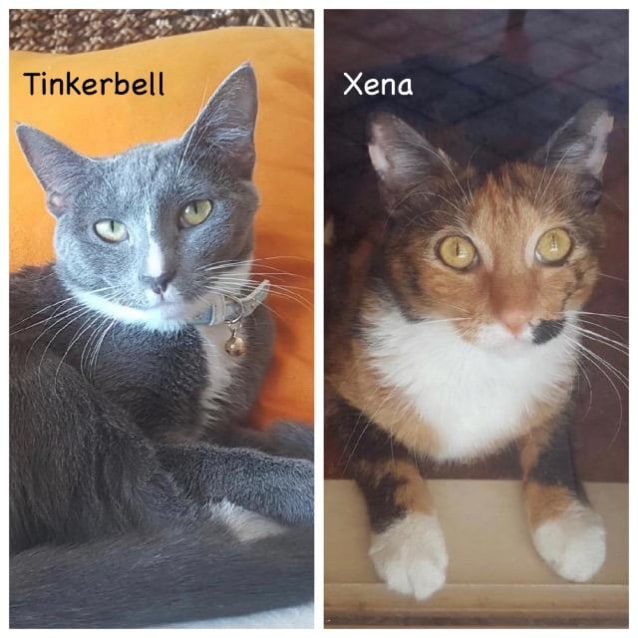 Photo of Tinkerbell