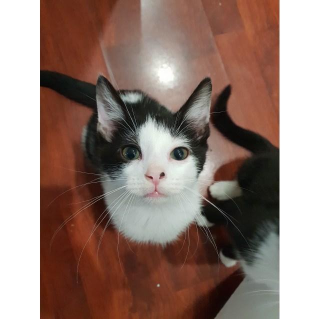 Photo of Dominoe